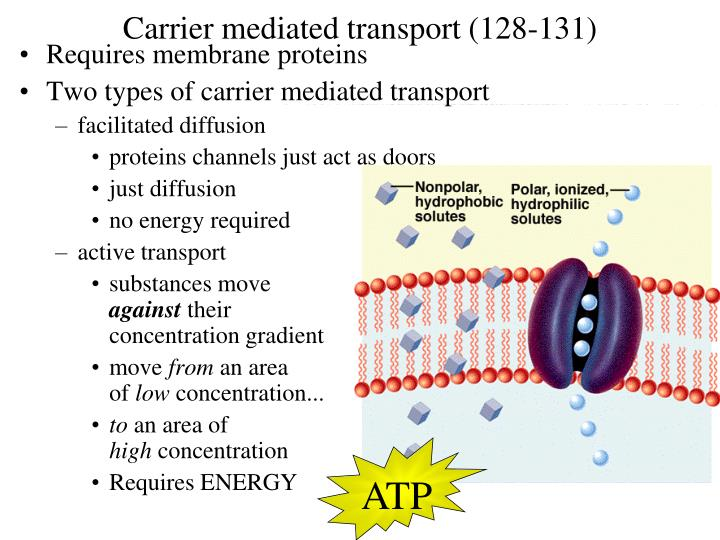 Carrier mediated transport (128-131)