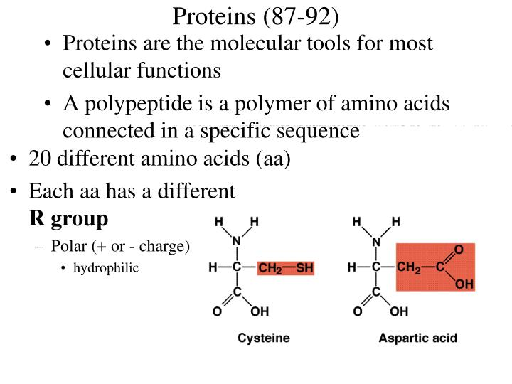 Proteins (87-92)