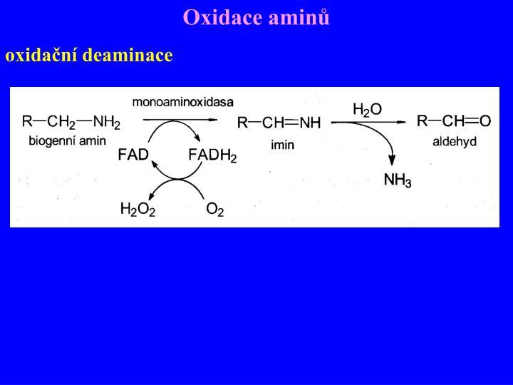 Oxidace aminů