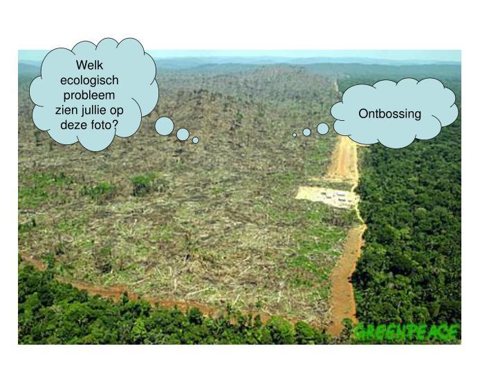 Welk ecologisch probleem zien jullie op deze foto?