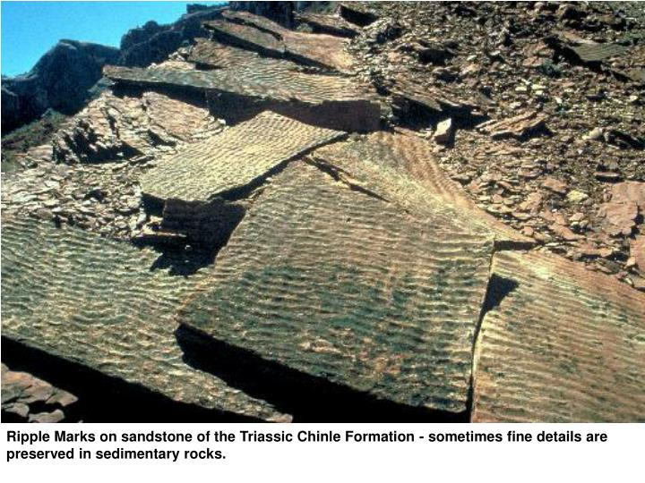 Ripple Marks on sandstone of the Triassic Chinle Formation - sometimes fine details are preserved in sedimentary rocks.