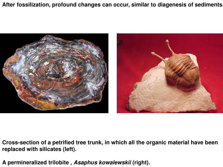 After fossilization, profound changes can occur, similar to diagenesis of sediments.