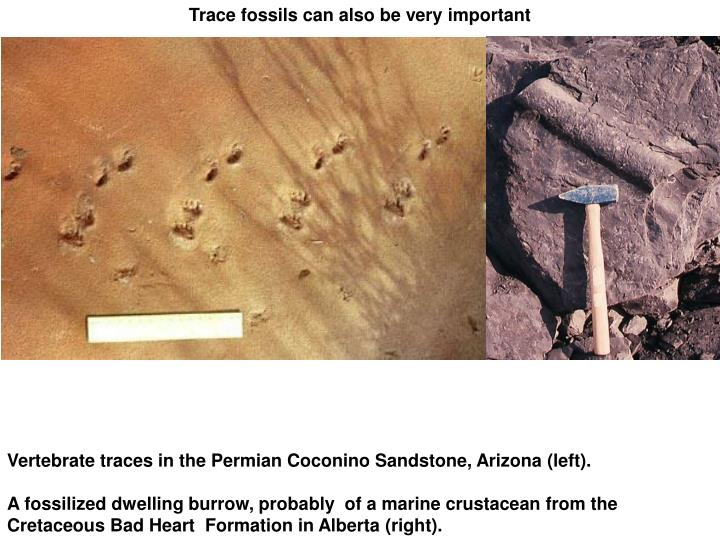 Trace fossils can also be very important