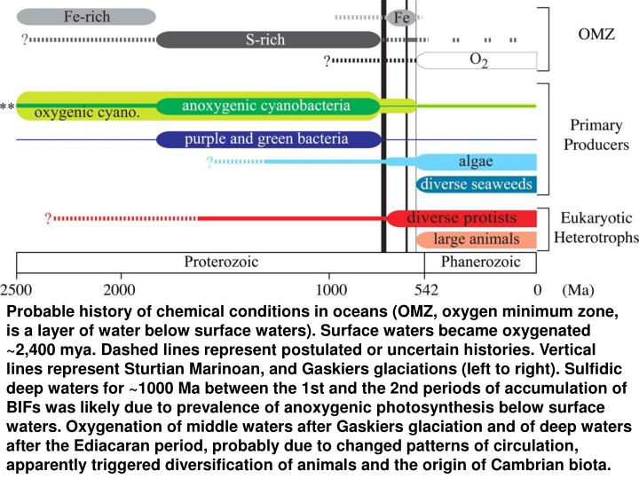 Probable history of chemical conditions in oceans (OMZ, oxygen minimum zone, is a layer of water below surface waters). Surface waters became oxygenated ~2,400 mya. Dashed lines represent postulated or uncertain histories. Vertical lines represent Sturtian Marinoan, and Gaskiers glaciations (left to right). Sulfidic deep waters for ~1000 Ma between the 1st and the 2nd periods of accumulation of BIFs was likely due to prevalence of anoxygenic photosynthesis below surface waters. Oxygenation of middle waters after Gaskiers glaciation and of deep waters after the Ediacaran period, probably due to changed patterns of circulation, apparently triggered diversification of animals and the origin of Cambrian biota.
