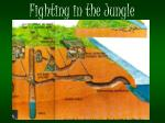 fighting in the jungle1