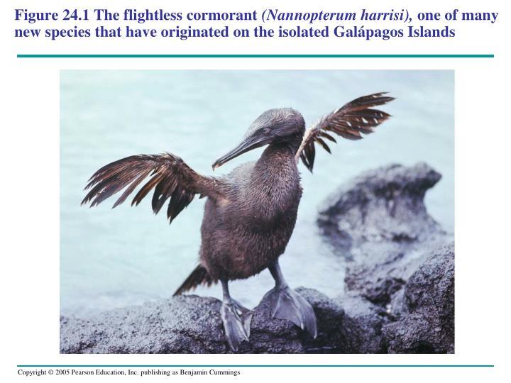 Figure 24.1The flightless cormorant