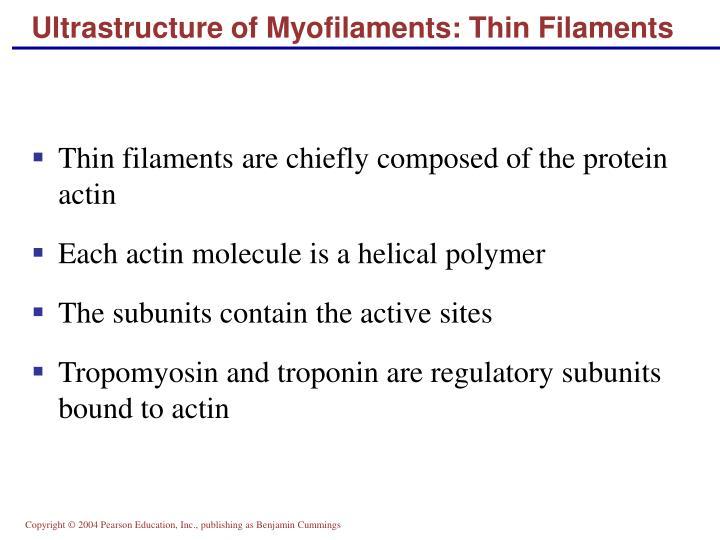 Ultrastructure of Myofilaments: Thin Filaments