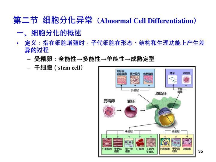 一、细胞分化的概述