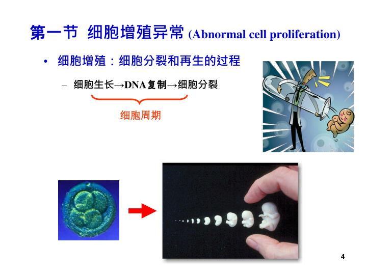 第一节  细胞增殖异常