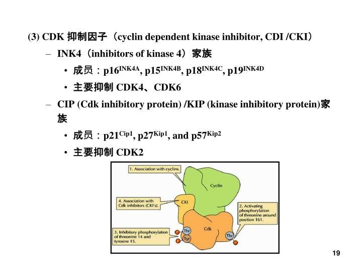 (3) CDK