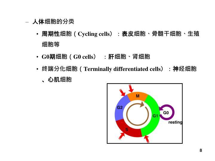 人体细胞的分类