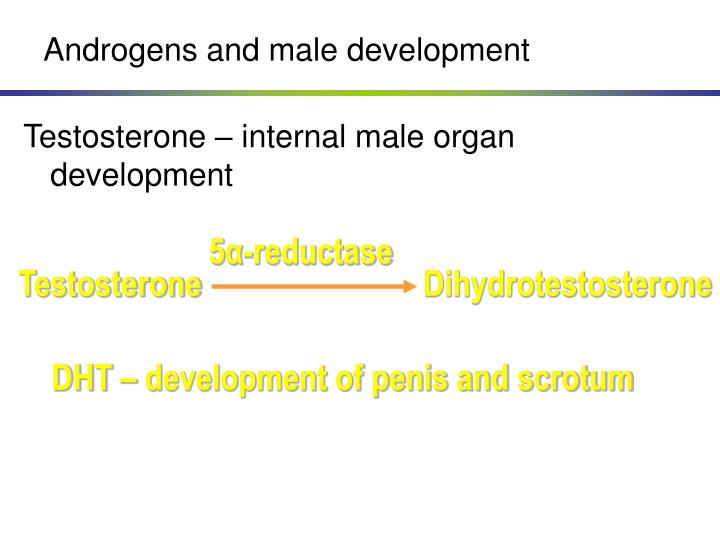 Androgens and male development