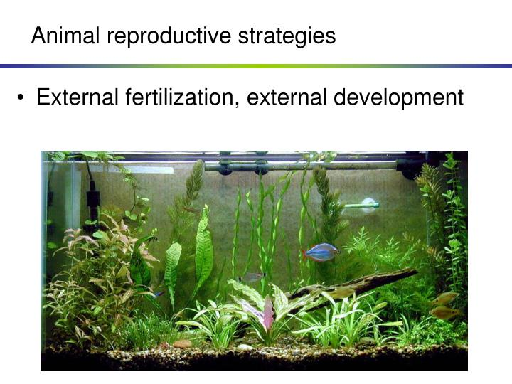 Animal reproductive strategies