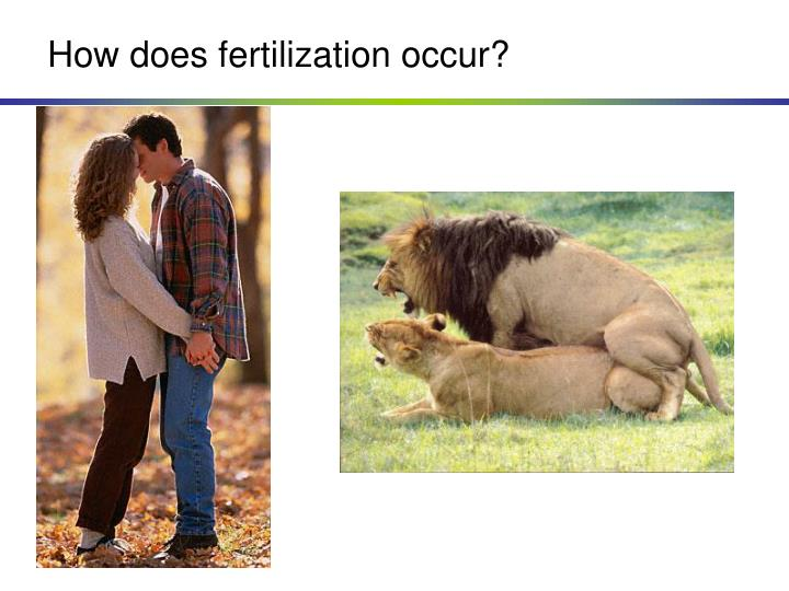 How does fertilization occur?