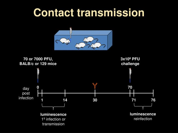 Contact transmission