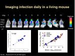 imaging infection daily in a living mouse