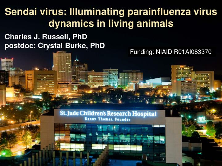 Sendai virus illuminating parainfluenza virus dynamics in living animals