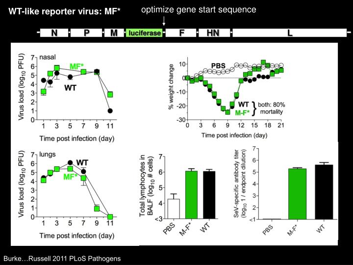 optimize gene start sequence