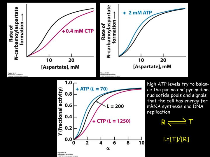 high ATP levels try to balan-