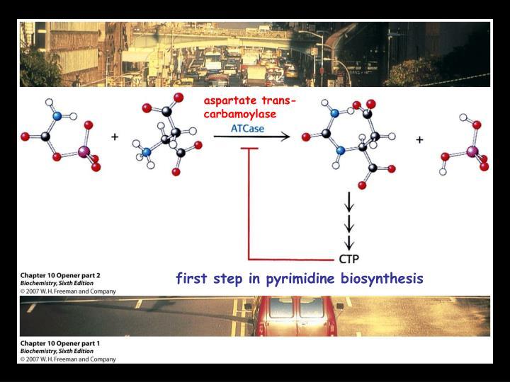 aspartate trans-