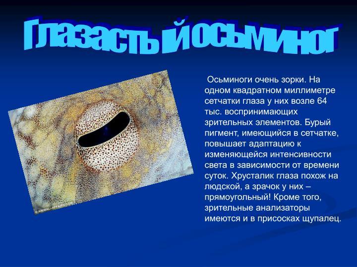 Глазастый осьминог