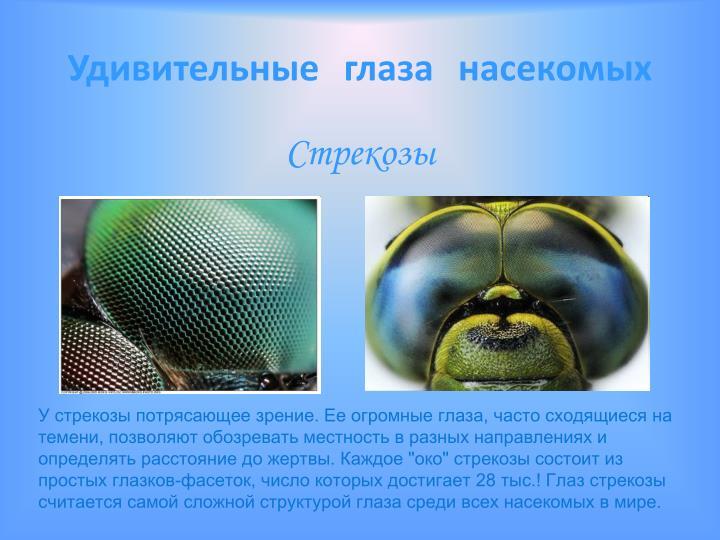 Удивительные глаза насекомых