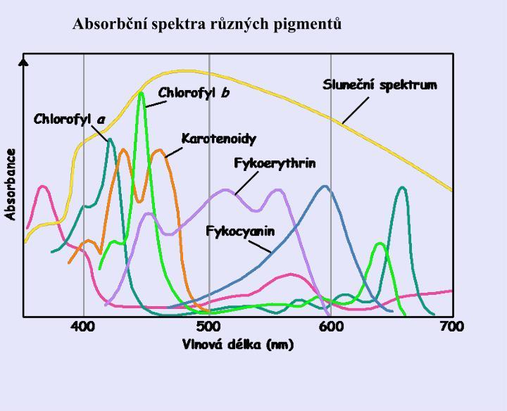 Absorbční spektra různých pigmentů