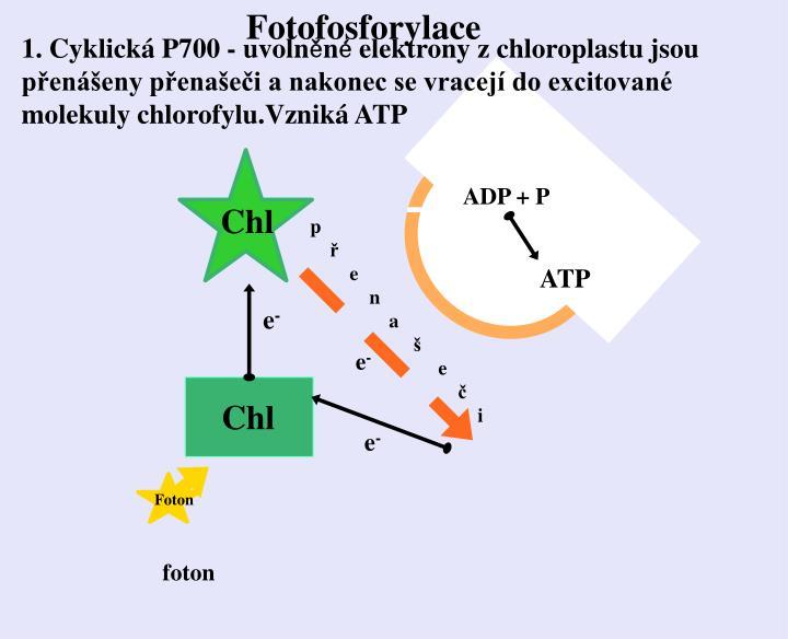 Fotofosforylace