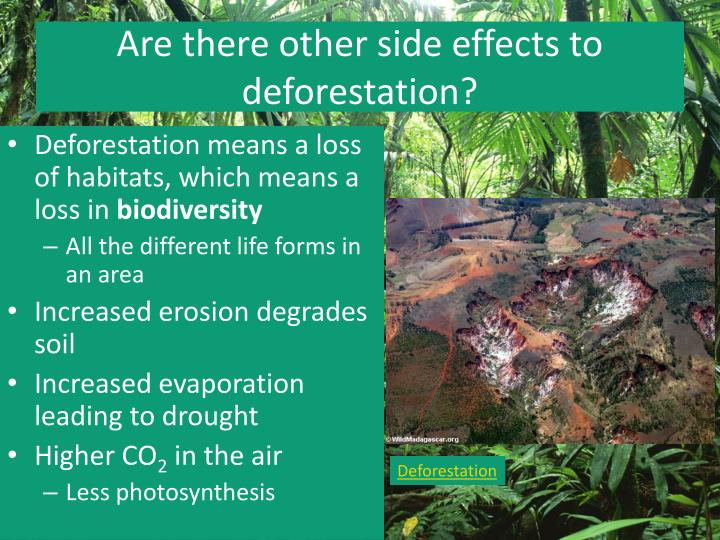 Are there other side effects to deforestation?