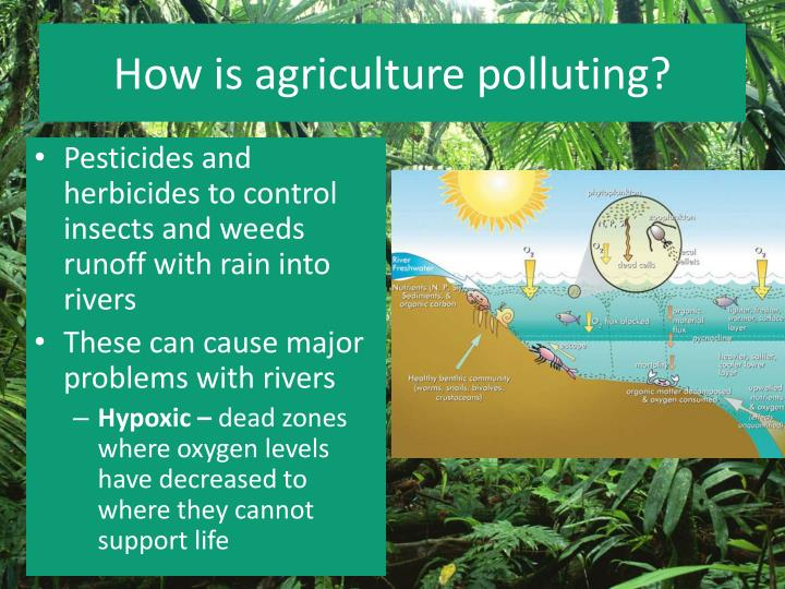 How is agriculture polluting?