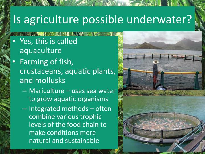 Is agriculture possible underwater?