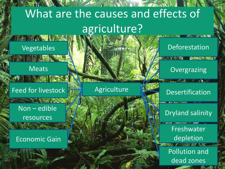 What are the causes and effects of agriculture?