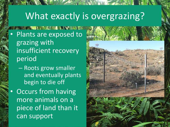 What exactly is overgrazing?