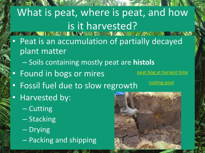What is peat, where is peat, and how is it harvested?