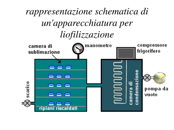 rappresentazione schematica di un'apparecchiatura per liofilizzazione
