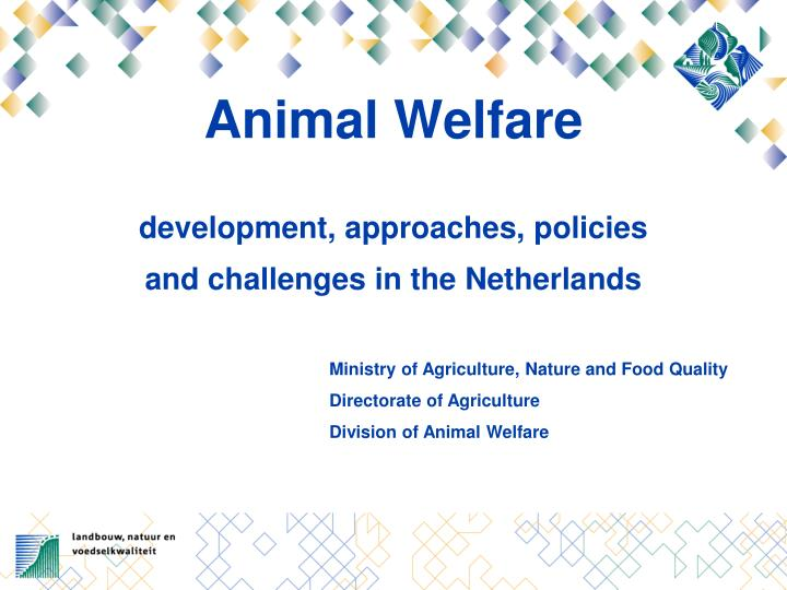 Animal welfare development approaches policies and challenges in the netherlands