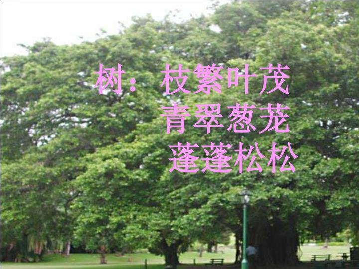 树:枝繁叶茂