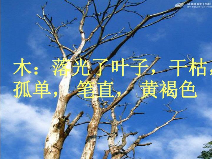 木:落光了叶子,干枯,孤单, 笔直, 黄褐色