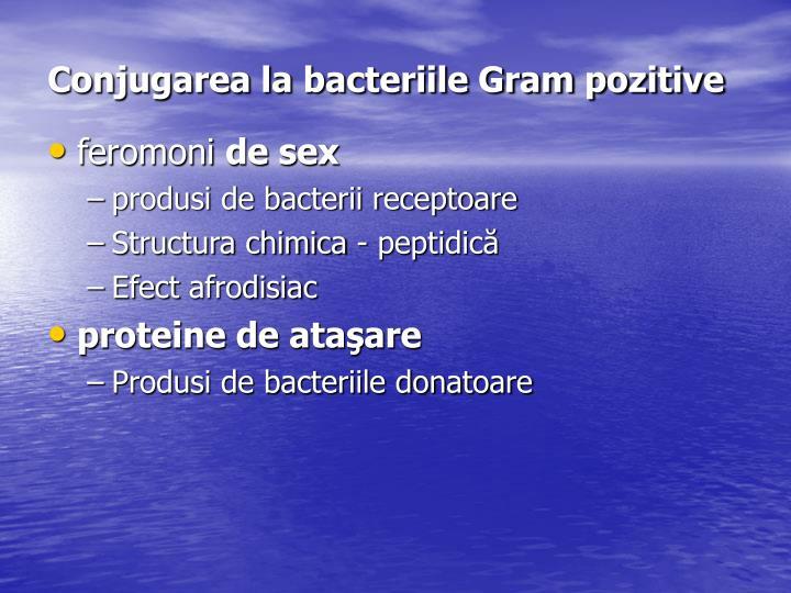 Conjugarea la bacteriile Gram pozitive