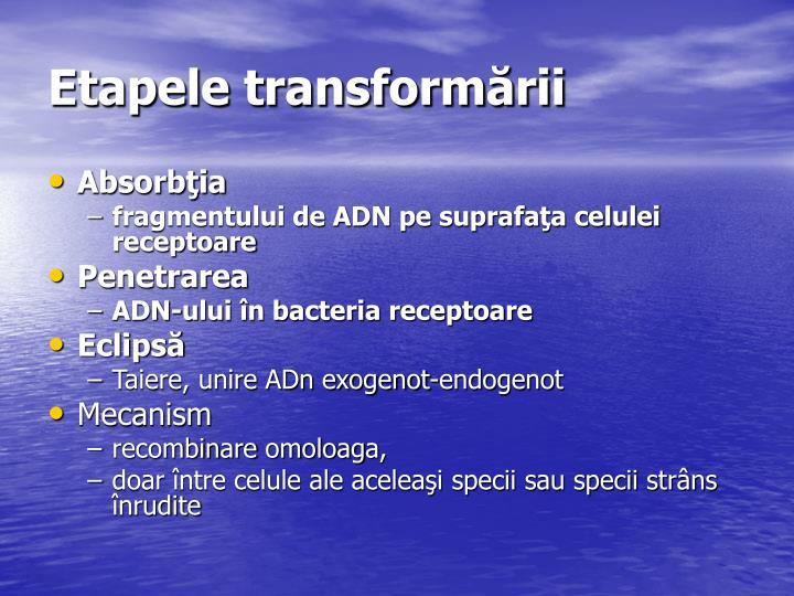 Etapele transformării