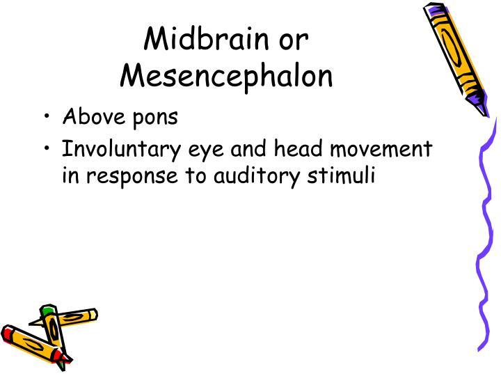 Midbrain or Mesencephalon