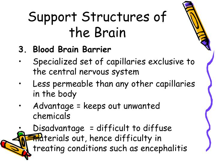 Support Structures of the Brain
