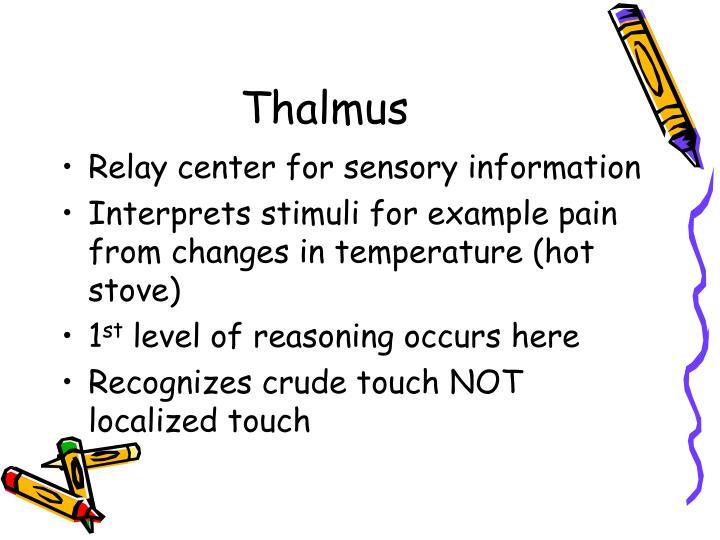Thalmus