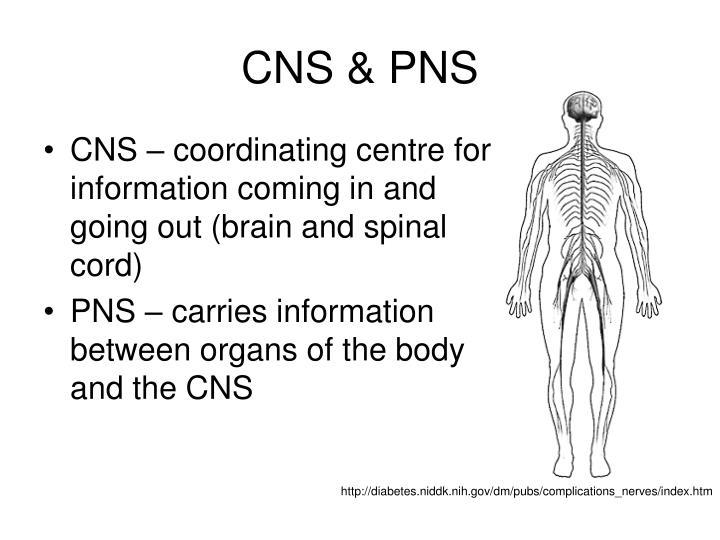 CNS & PNS