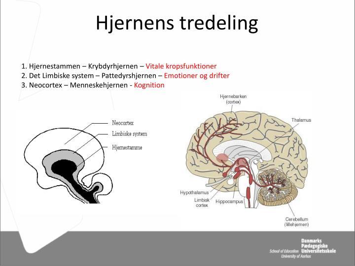 Hjernens tredeling