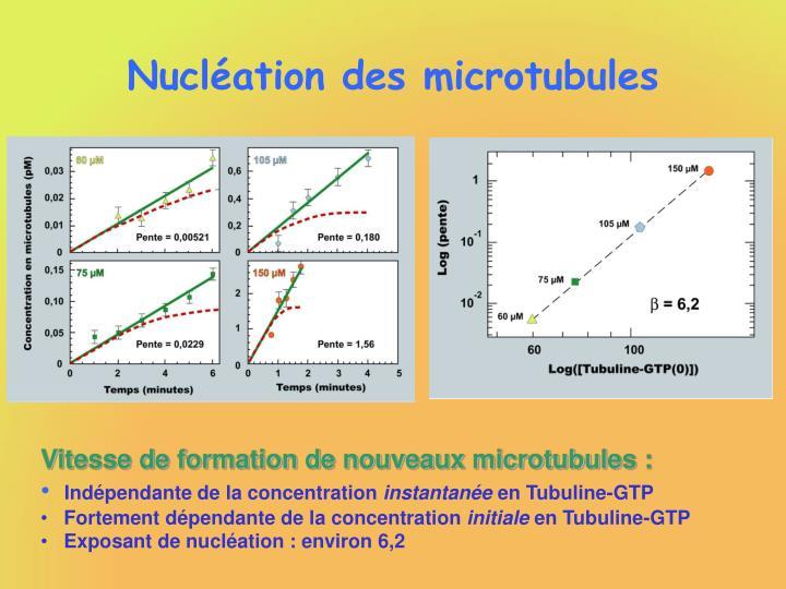 Nucléation des microtubules