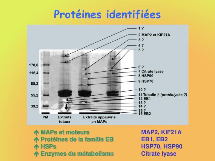 Protéines identifiées