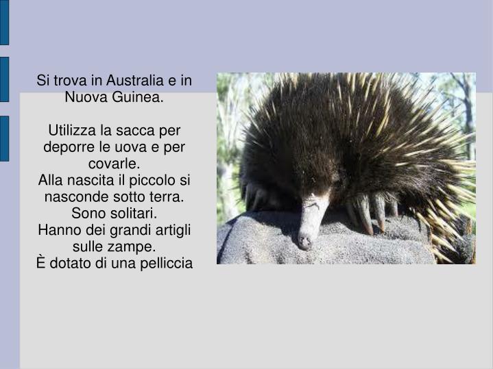 Si trova in Australia e in Nuova Guinea.
