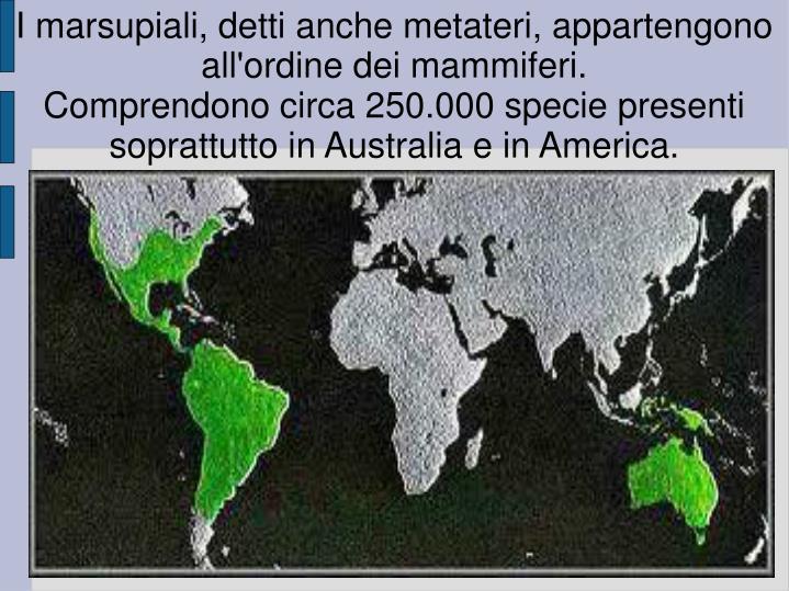 I marsupiali, detti anche metateri, appartengono all'ordine dei mammiferi.
