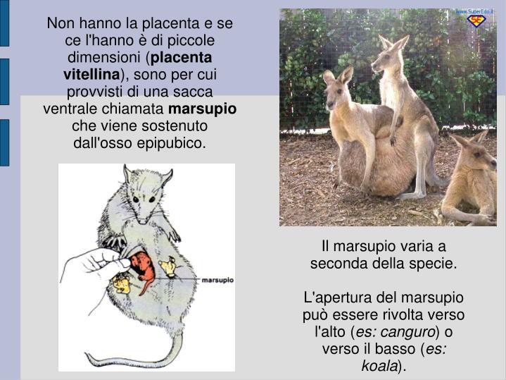 Non hanno la placenta e se ce l'hanno è di piccole dimensioni (